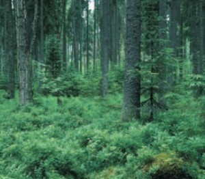 Pskov model forest: minimal cost / maximal gain